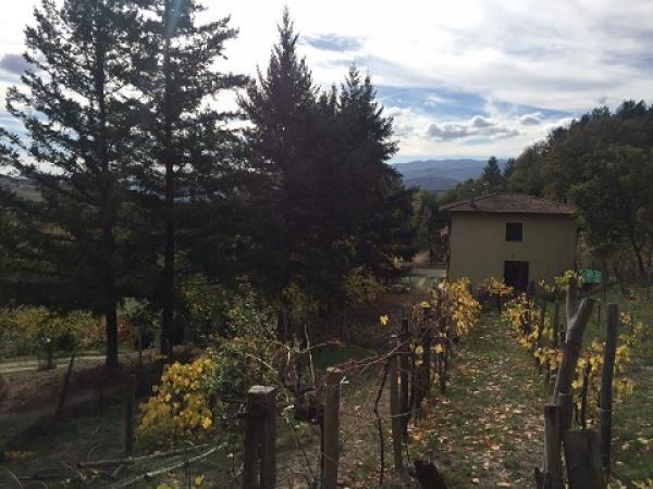 vendiamo CASA di CAMPAGNA provincia di Arezzo